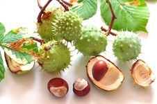 Free Chestnuts Royalty Free Stock Photo - 16232775