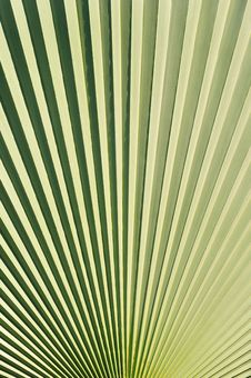 Free Palm Leaf Stock Photo - 16235400