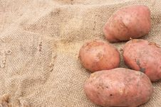 Free Potatoes On Sackcloth Stock Images - 16235674