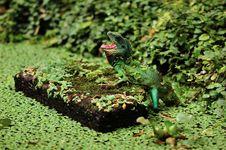 Free Dragon Lizard Stock Photos - 16236813