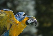 Free Flapping Macaw Stock Photography - 16237092