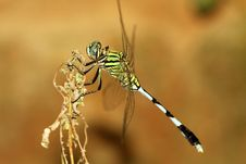 Free Dragonfly Royalty Free Stock Image - 16237246
