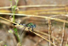 Free Dragonfly Balance Stock Photo - 16237310
