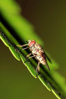 Free Fly Predator Stock Photos - 16237563