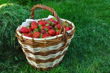 Free Basket Full Of Red Strawberry Royalty Free Stock Photo - 16238645