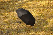Free Umbrella In A Park Stock Photo - 16239390