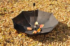 Free Umbrella In A Park Stock Images - 16239704