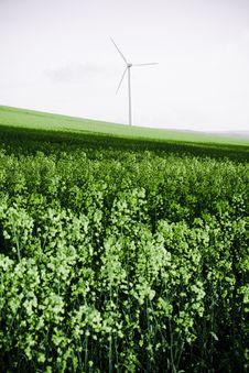 Free Windmill And Rape Field Stock Photography - 16239902