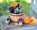 Free Egg-plants And Flowers Royalty Free Stock Photos - 16248398
