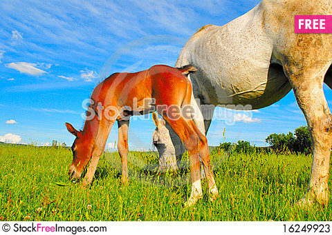 Free Horse And Colt Stock Photos - 16249923