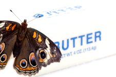 Free Buckeye Butterfly On A Butter Royalty Free Stock Images - 16241459