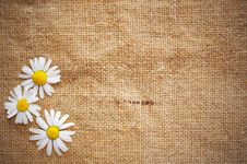 Free Blank Grungy Canvas Background Royalty Free Stock Images - 16241909