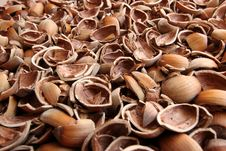 Free Cracked Hazelnuts Stock Image - 16242081