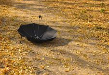 Free Umbrella In A Park Stock Photography - 16242652