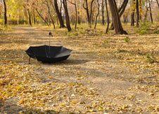 Free Umbrella In A Park Stock Image - 16242671