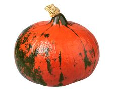 Free Japanese Pumpkin Stock Photography - 16244322