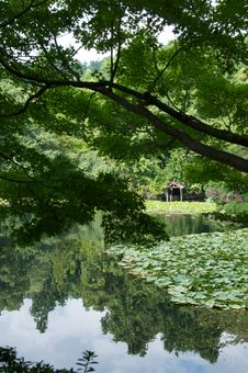 Free Japanese Pond Royalty Free Stock Images - 16244399