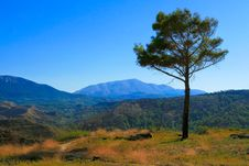 Free Lonely Tree And Mountain Landscape Royalty Free Stock Photography - 16244707