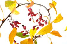 Free Autumn Sprig Royalty Free Stock Photos - 16245708