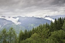 Free The Forest Of Le Praz Royalty Free Stock Photos - 16246868