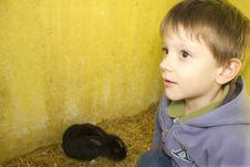 Free Kid And Rabbit Stock Image - 16247541