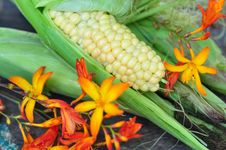 Free Corn-cob And Flowers Stock Photo - 16248100
