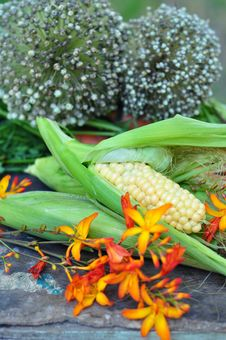 Free Seed Of Bow And Corn Stock Photography - 16248132