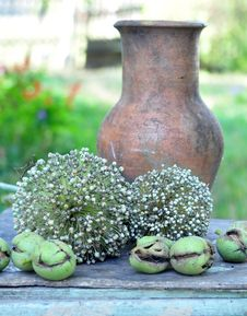 Free Nuts And Seed Of Bow Stock Photo - 16248210