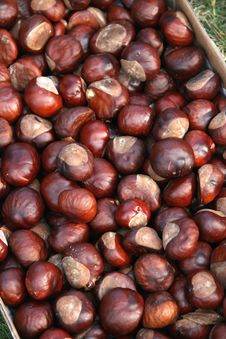 Free Basket Of Chestnuts Stock Images - 16248334