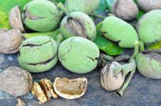 Free Walnuts Stock Images - 16248354