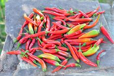 Free Bitter Pepper Stock Images - 16248844