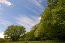 Free Summer Landscape Of Young Green Forest Stock Photo - 16249650