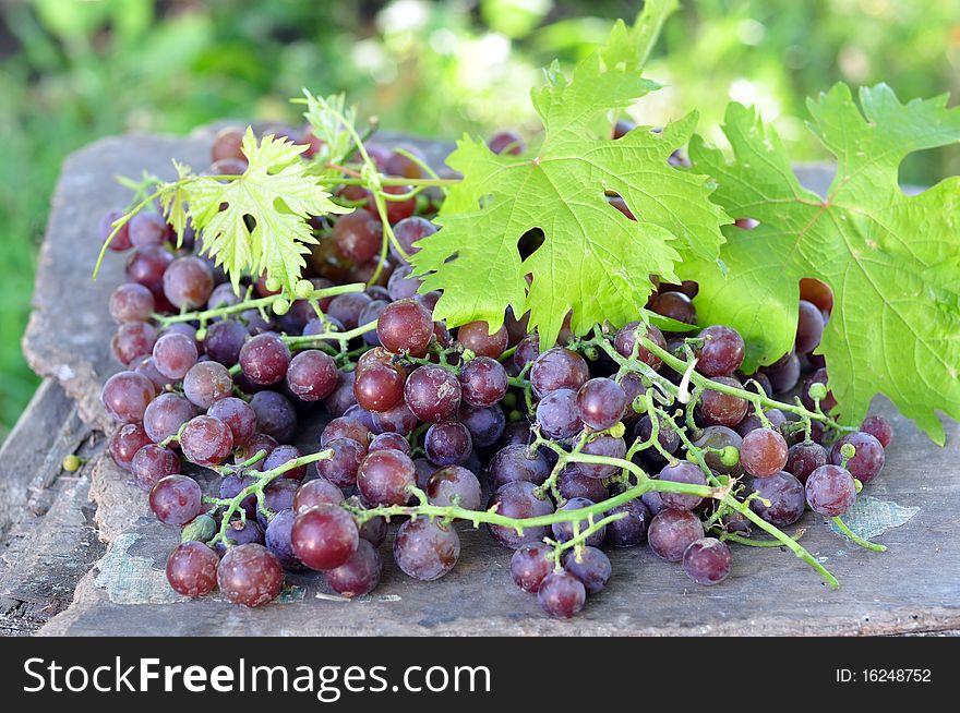 Dark blue vine