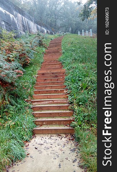 Stairway, way of life, forest, autumn, breathe life.