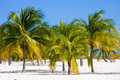 Free Three Palms Royalty Free Stock Image - 16250666