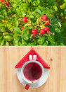 Free Hips And Cups Of Hot Tea Stock Photography - 16253132