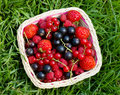 Free Ripe Berries In A Basket Stock Image - 16254361