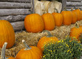 Free Pumpkins For Sale Stock Photography - 16258052