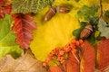 Free Fallen Autumn Leaves Stock Photo - 16259560