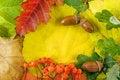 Free Fallen Autumn Leaves Stock Image - 16259561
