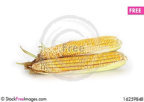 Free Raw Corn Royalty Free Stock Photos - 16259848