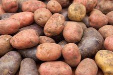 Free Potatoes Royalty Free Stock Image - 16250466