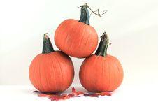 Three Pumpkins - Isolated Royalty Free Stock Photos