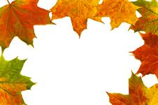 Free Leaves Stock Image - 16251301