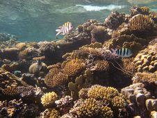 Free Underwater World Stock Photos - 16252453