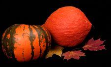 Free Autumn Royalty Free Stock Photos - 16253088