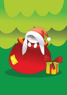 Free Rabbit And Bag Stock Photos - 16253843