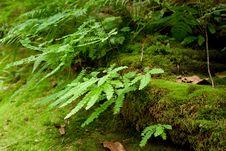 Free Ferns Royalty Free Stock Image - 16254056