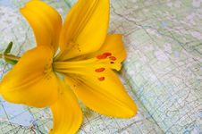 Free Lily On A Card Map Royalty Free Stock Photos - 16254718