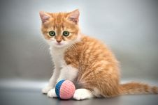Free Kitten With A Ball On A Gray Background Royalty Free Stock Images - 16255219